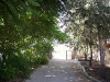 entrada-olivo